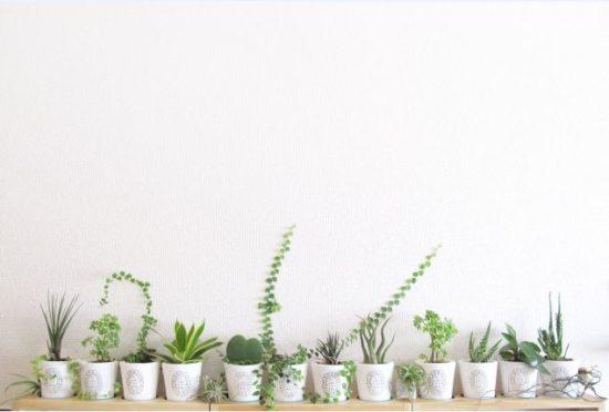 観葉植物の福袋